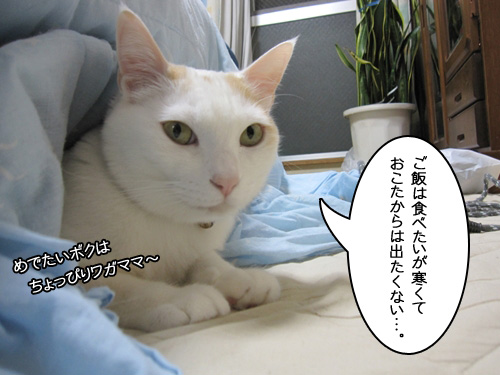 Img_3880_r
