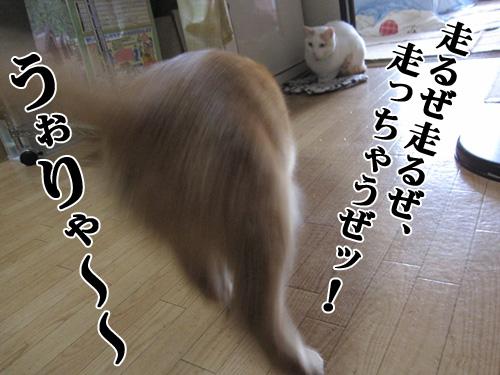 Img_4091_r