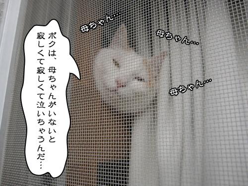 Img_4508_r