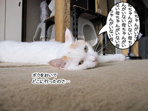 Img_6877_r