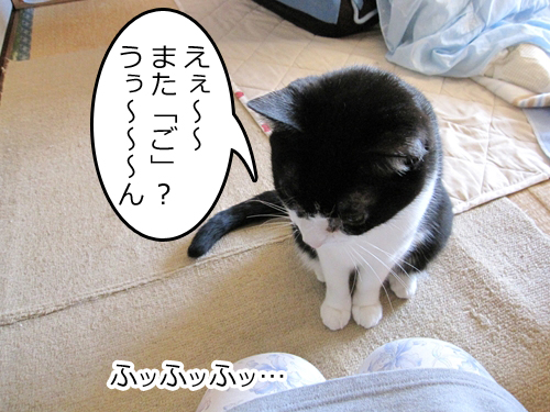 Img_k425